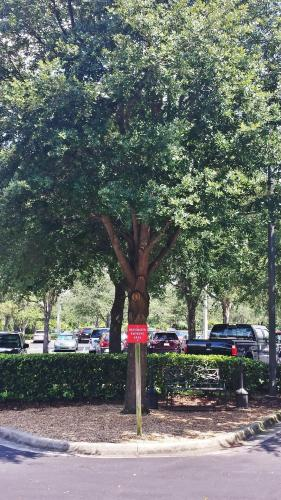 Towneplace Suites By Marriott Orlando East/ucf - Orlando, FL 32817