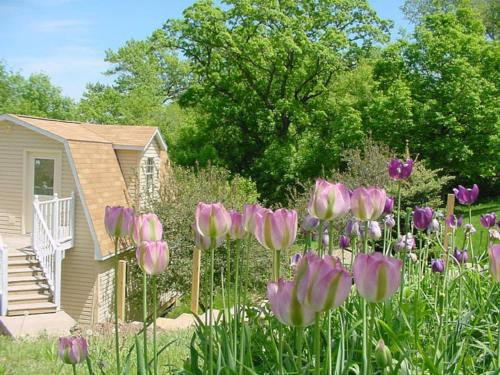 Trickling Waters Retreat - Marquette, IA 52158