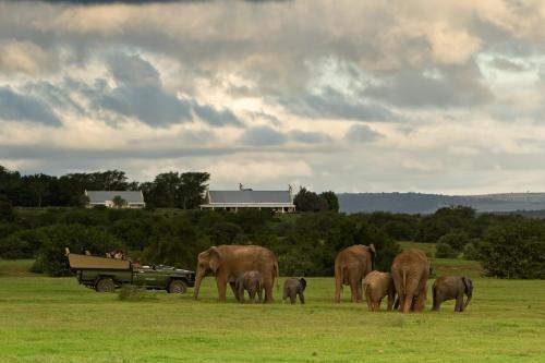 Addo Elephant National Park, Addo, 6105, South Africa.