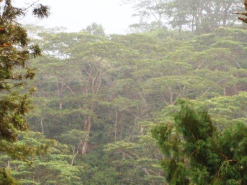 Knuckles Plantation Bungalow