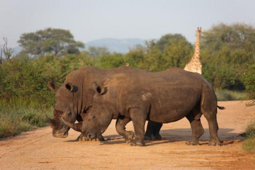 Rhino Ridge Safari Lodge Photo