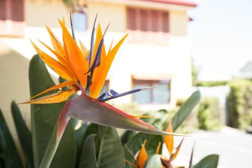Apartments Paradiso Foto 3