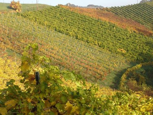 Weingut Winzerzimmer Toso