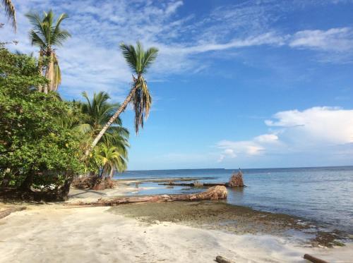 El Jardin de Playa Negra Photo
