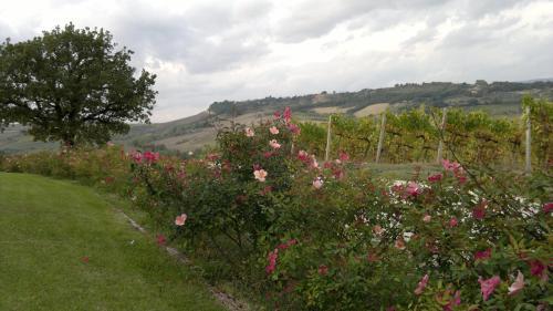 Locanda Palazzone - 16 of 134
