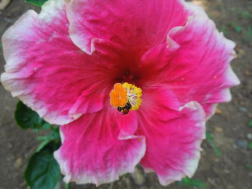 Casitas Las Flores Photo
