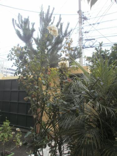Le Mayu Yellow Photo