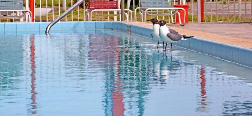 Beachwalk Inn - Clearwater Beach, FL 33767