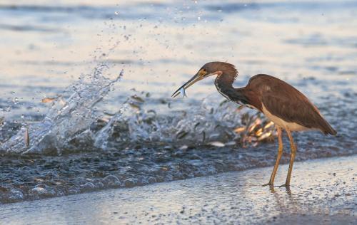 Black Dolphin Inn - New Smyrna Beach, FL 32168