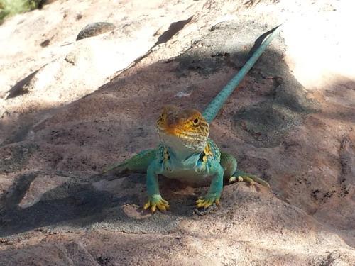 Stone Lizard Lodging