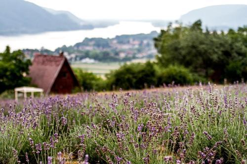 Natura Hill Vendégház és Étterem photo 12
