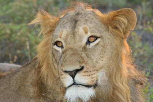 Chisomo Safari Camp Photo