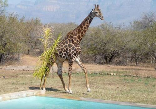 Blyde Wildlife Estate House Photo