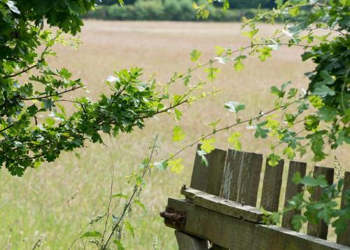 Cadnam, near Lyndhurst, SO40 2NR, England.