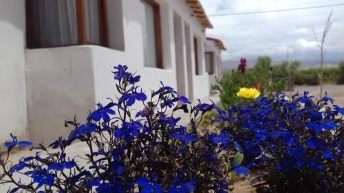 Foto de Caba�as Lunita