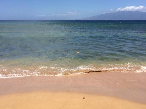 The Ka'anapali Shores Suite #103 Photo