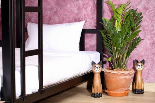 Thai Cat Hostel photo 7