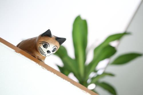 Thai Cat Hostel photo 16