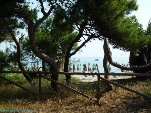 Ficus Pineto Vacanza