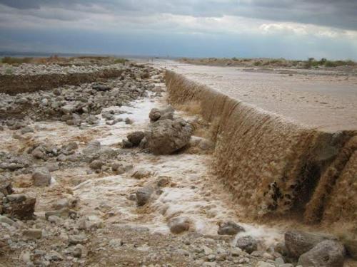 Rose Dead Sea Neve Zohar