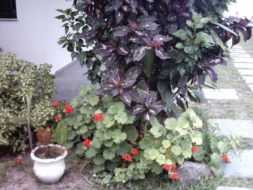 Pousada Neves Paraiso Tropical Photo