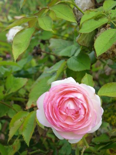Fleur de Ciel Photo