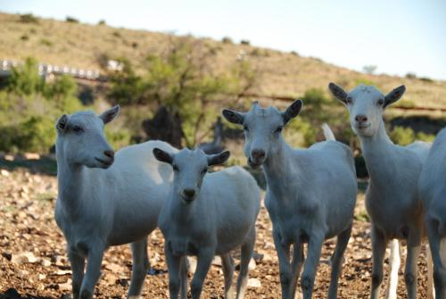 Muggefontein Guest Farm Photo