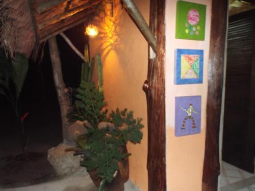 Floresta Acústica Photo
