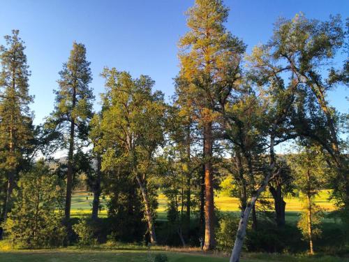 Sierra Meadows Photo