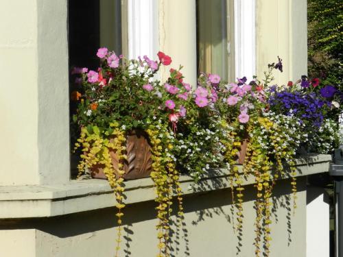 Balmoral Guesthouse photo 13