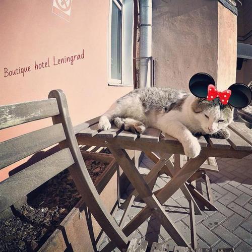 Boutique Hotel Leningrad photo 48