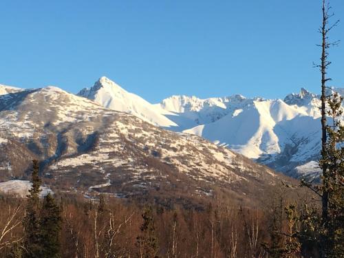 Alaska Knotty Pine B&b
