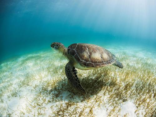 Secrets Akumal Riviera Maya All Inclusive-Adults Only Photo