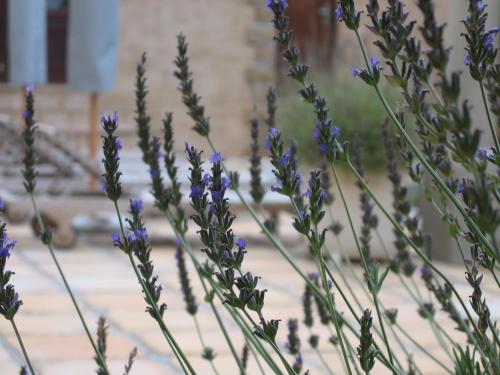 Auberge Provence Photo