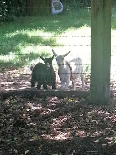 Wildwood Farm Bed & Breakfast - Oak Harbor, WA 98277