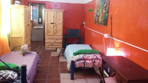 Hospedaje La Rana Photo