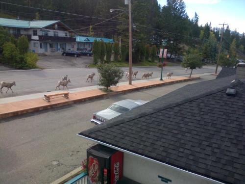 Appletree Inn - Radium Hot Springs, BC V0A 1M0