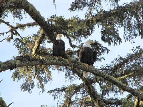 Watch The Eagles Soar From Here - Ucluelet, BC V0R 3A0