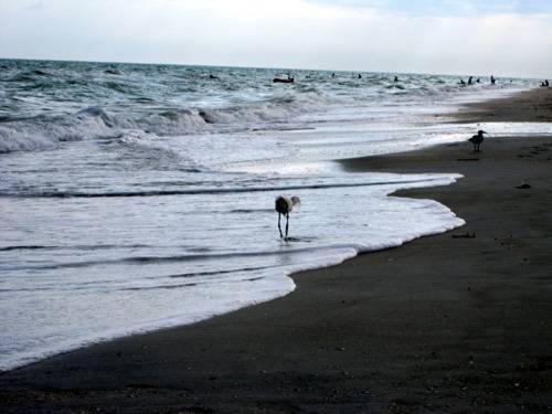 Sanibel Siesta on the Beach Unit 108 Photo