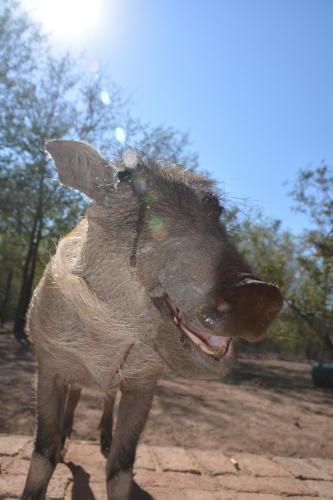 Honey Badger Safari House Photo
