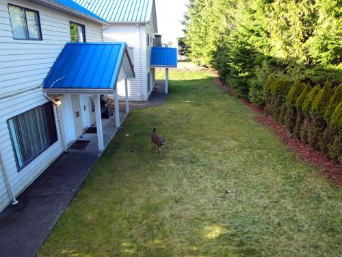 Whale's Tail Guest Suites - Ucluelet, BC V0R 3A0