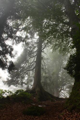 Çamlıhemşin Demirci konağı dağ evi online rezervasyon