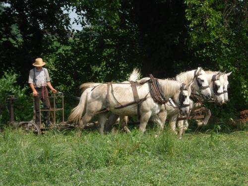 Cherry Lane Motor Inn Amish Country - Ronks, PA 17572