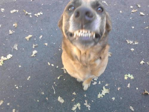 Zen Dog Retreat Photo
