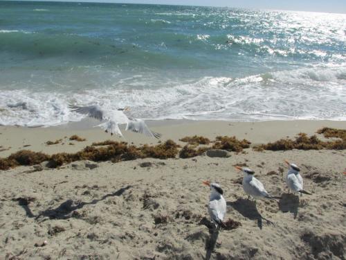 Ocean Breeze Photo