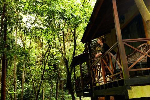 Selva de Laurel Photo