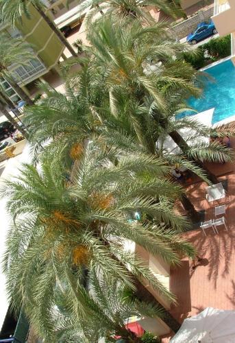 Hotel El Palmeral photo 2