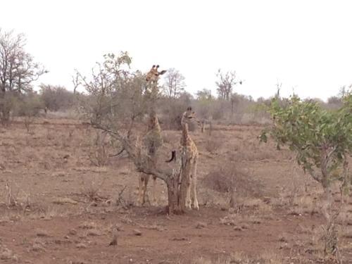 The Baobab Bush Lodge Photo