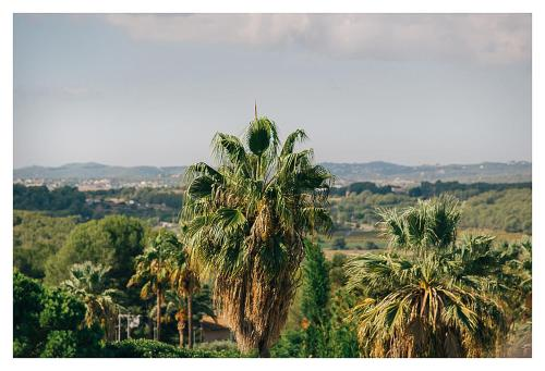 Casa Bonita Sitges photo 22