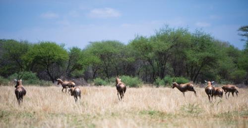 Boschfontein Guest Farm Photo